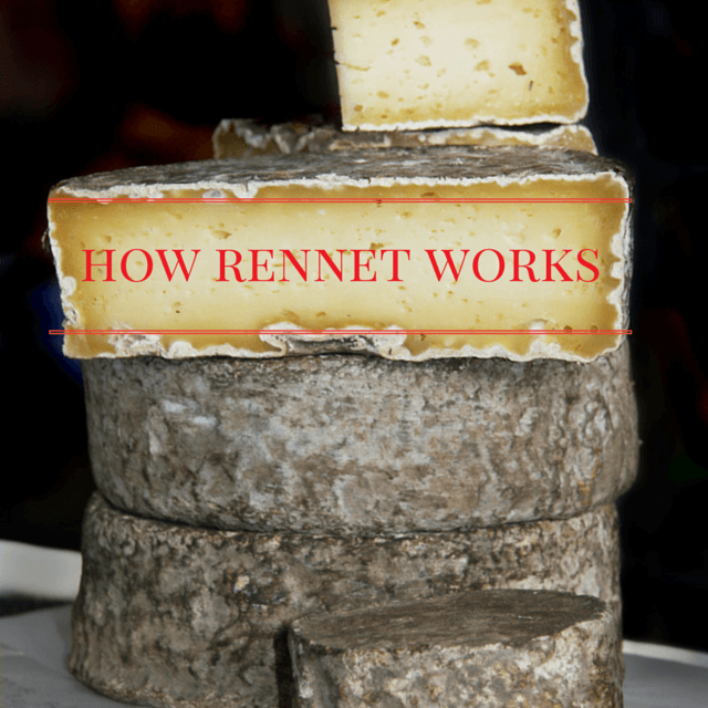 How rennet works