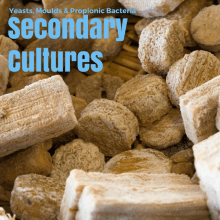 Secondary cultures on cheese making